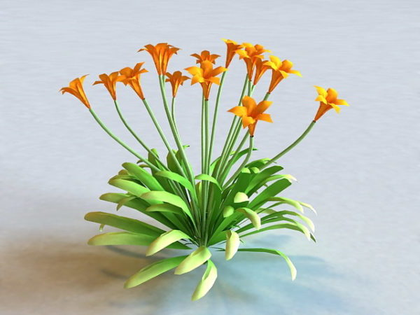 Canna Flowering Plant