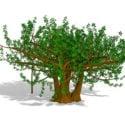 شجرة أوراق الشجر