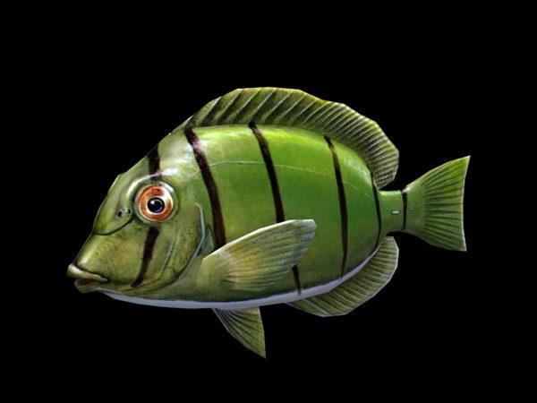 Vihreä tang kala
