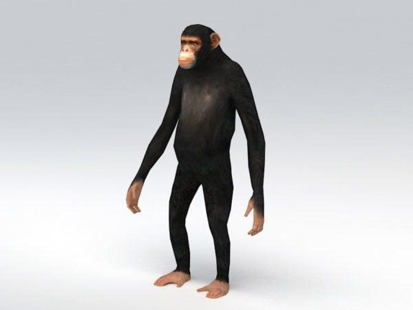 Animoitu simpanssin takila