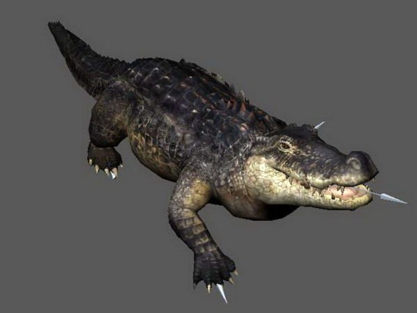 Crocodile Attacking Animated Rig