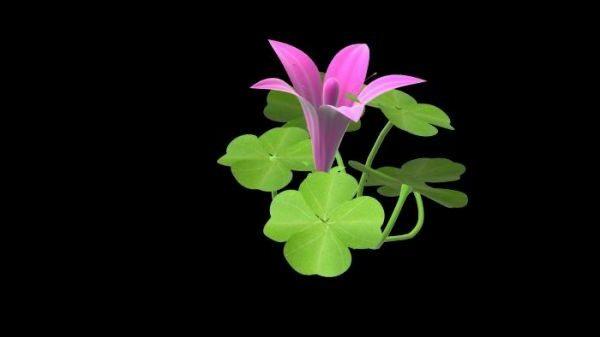 花とクローバー植物