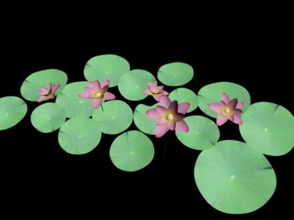 زهور الزنابق المائية