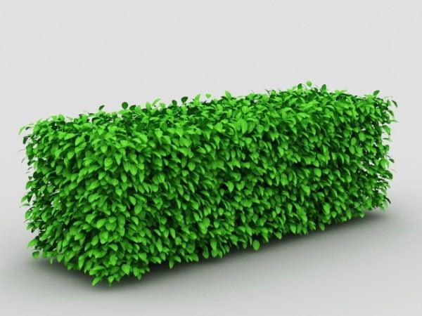Box Hedge Topiary