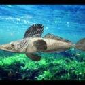 Südpolarmeer-Eisfisch