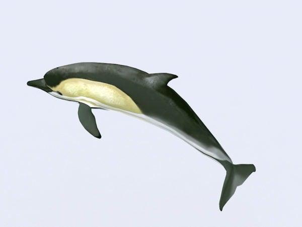 Yhteinen delfiinien uintilaite