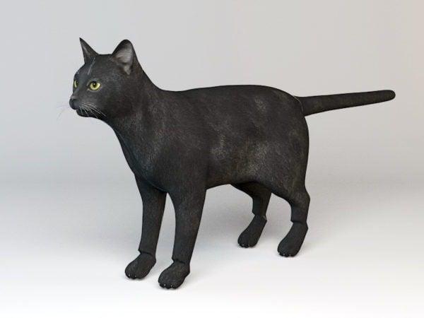 تلاعب القطة السوداء