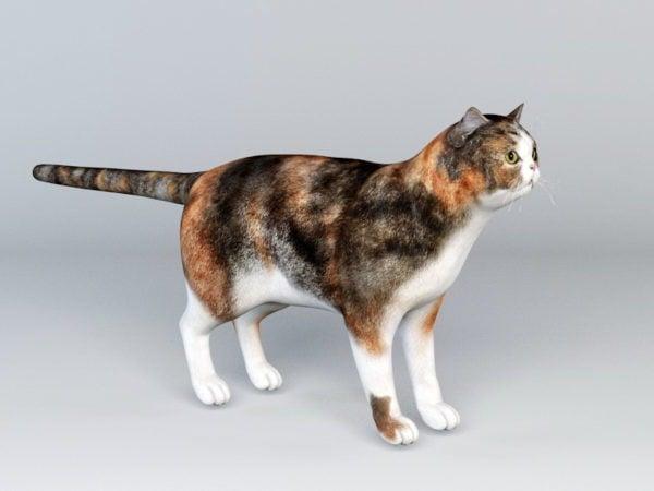 Calico Cat Rig