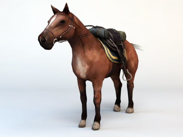 Hevonen satulalla
