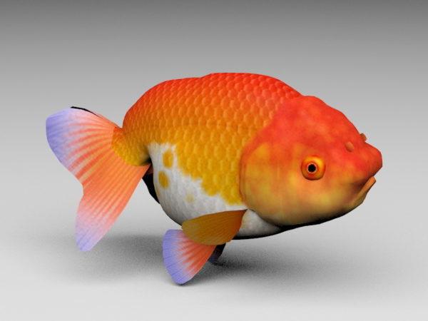 Lionhead kultakala