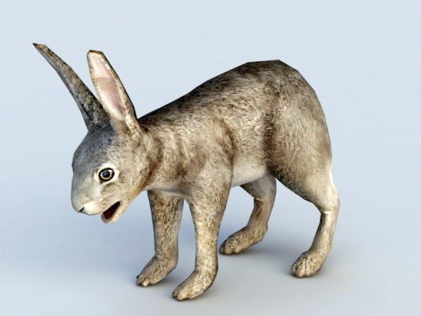 Liebre conejo