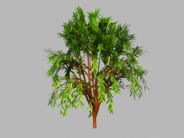 Small Willow Tree