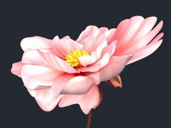 زهرة جميلة كبيرة