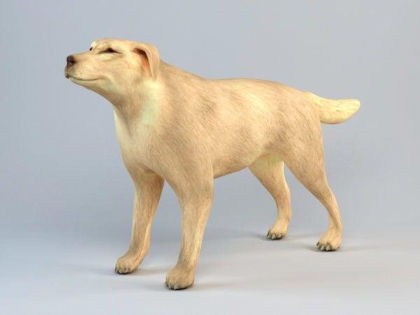 كلب الملاكم