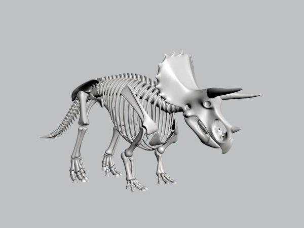 Triceratopsin luuranko