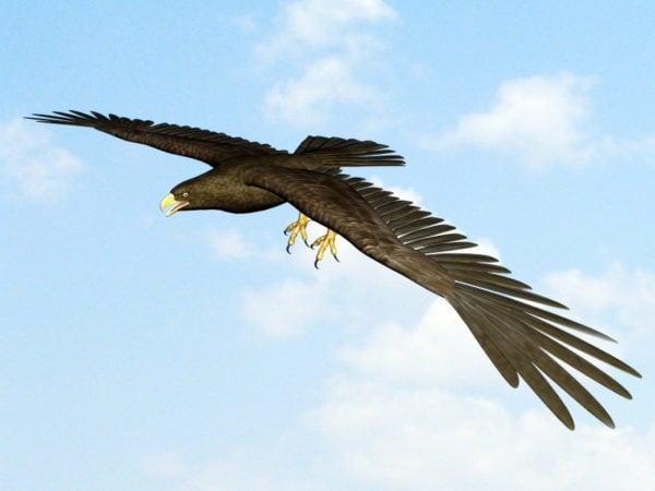 Águila Con Animación De Hueso