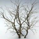 Visent træ