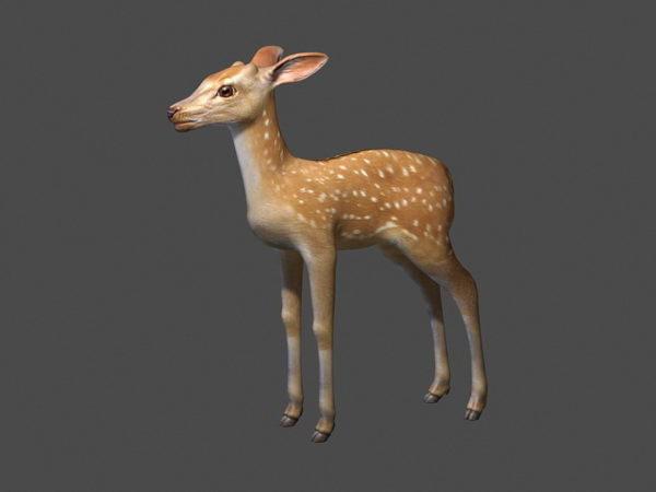 Fawn Deer