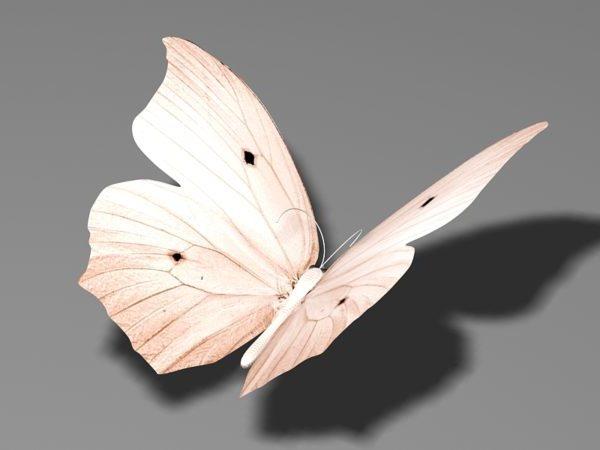Mariposa Beige