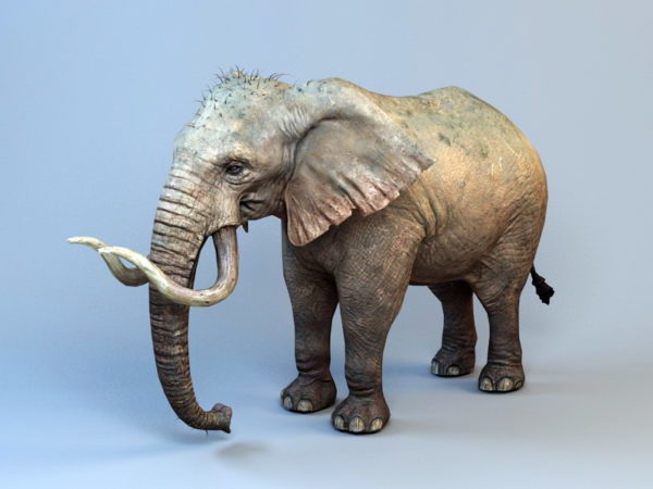 Ancient Mammoth Elephant