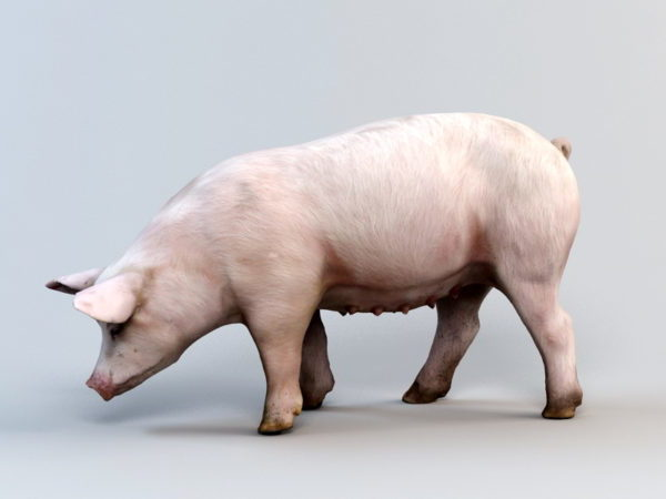 Siembra cerdo