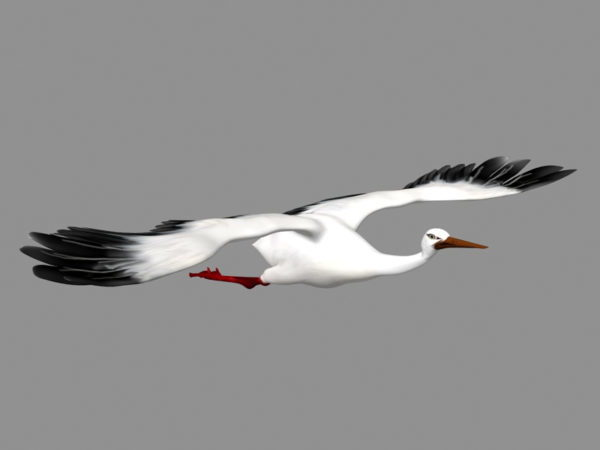 Crane Bird Flying -animaatio