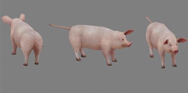 Cerdo doméstico
