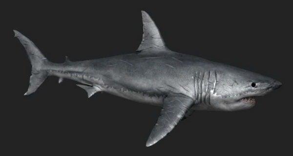 القرش الابيض الكبير الحيوان