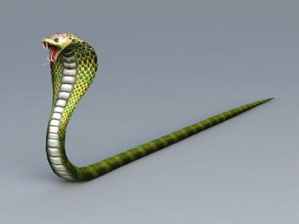 Kral Kobra Yılanı
