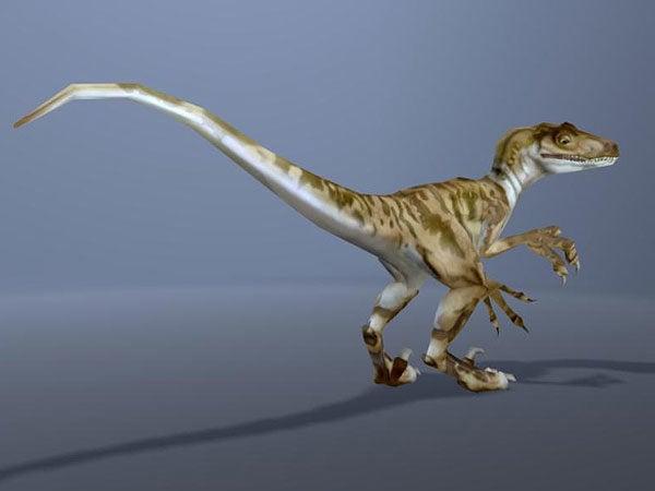 Velociraptor Dinosaur Animal