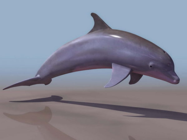 Meripullon delfiini