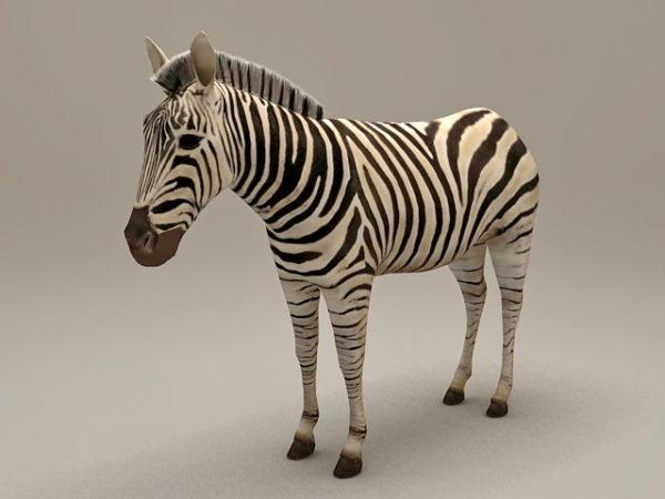 Africa Zebra Animal