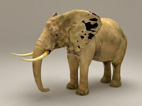 الفيل الافريقي الحيوان