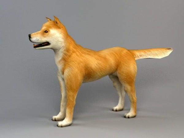Akita koiran biped luut