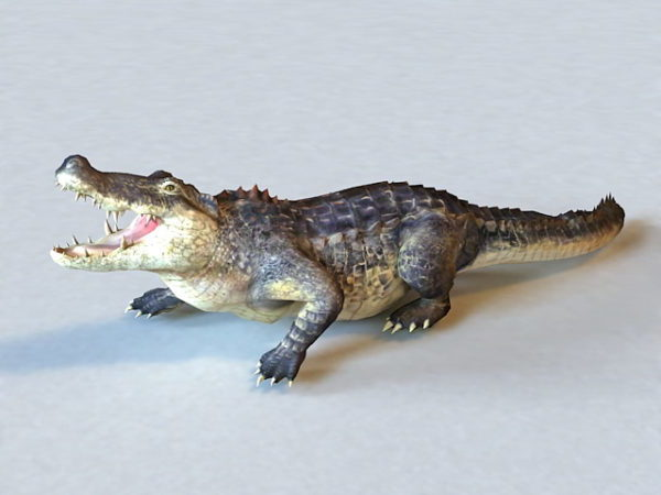 American Alligator Animated & Rigged