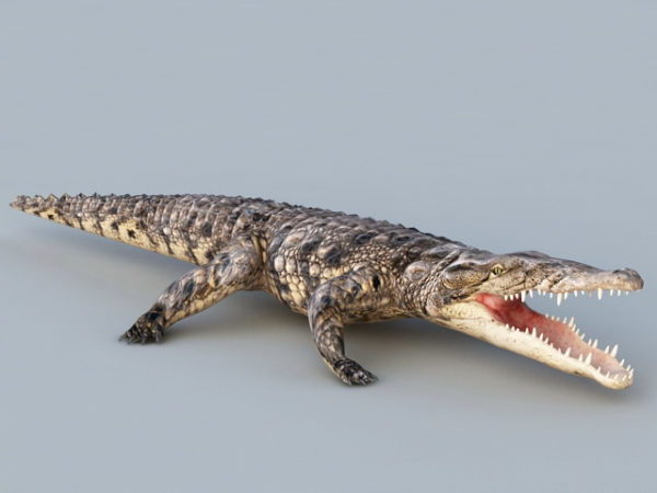 Animated Crocodile Rig