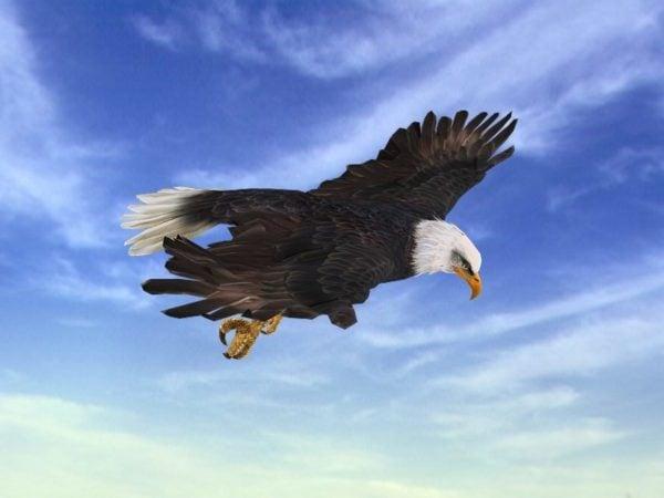 Ataque de águila animado