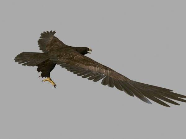 Águila animada volando