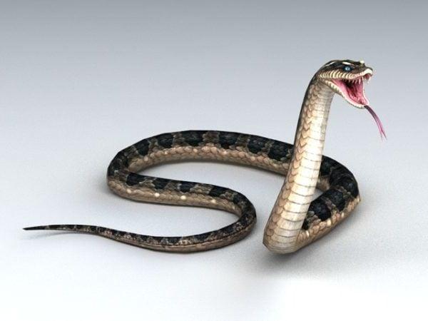 Animated Snake Attacking