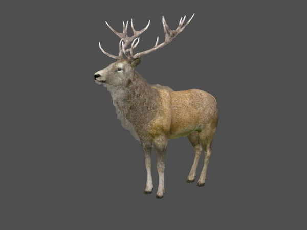 Animated Stag Deer