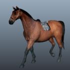Hayvan Arap Atı