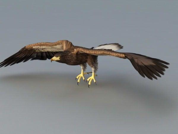 Aparejo de águila calva