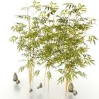 Bamboo Plants For Garden
