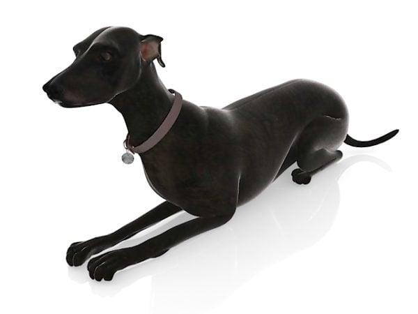 Black Dog Animal