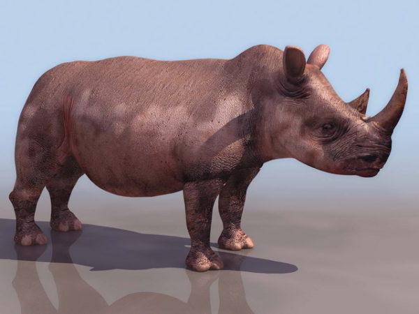 African Black Rhino