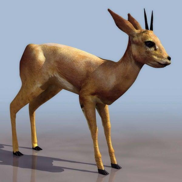 Blackbuck antilooppipeura