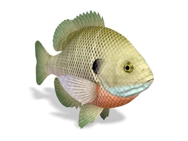 Bluegill Sunfish -eläin