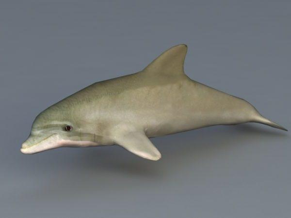 Pullonokkadelfiini