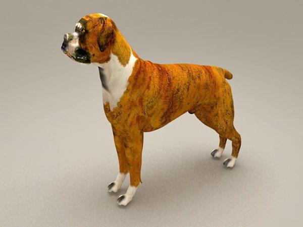 Boxer Dog Puppy