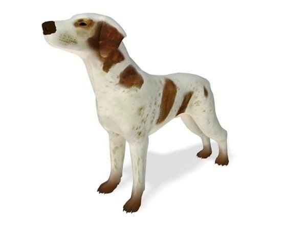 براكو ايطاليانو كلب حيوان